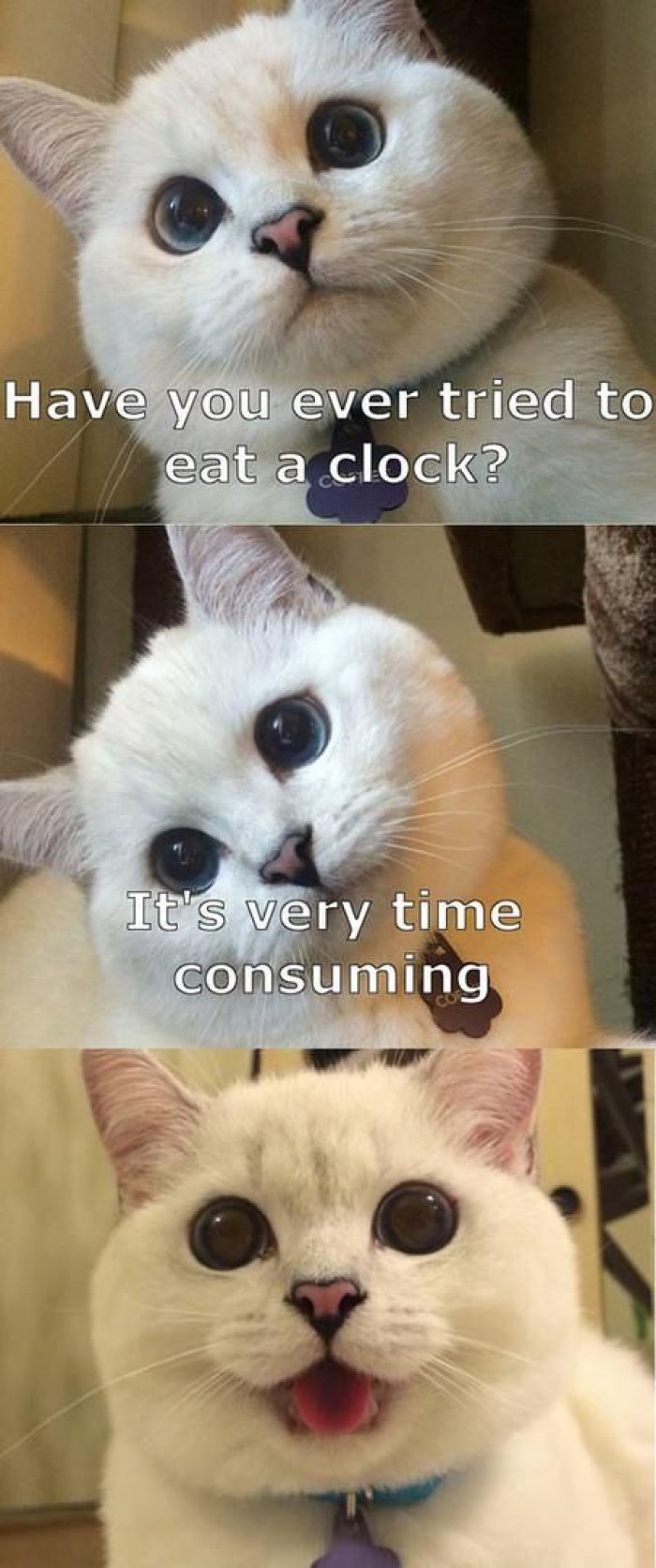 Have You Ever Tried To Eat A Clock?