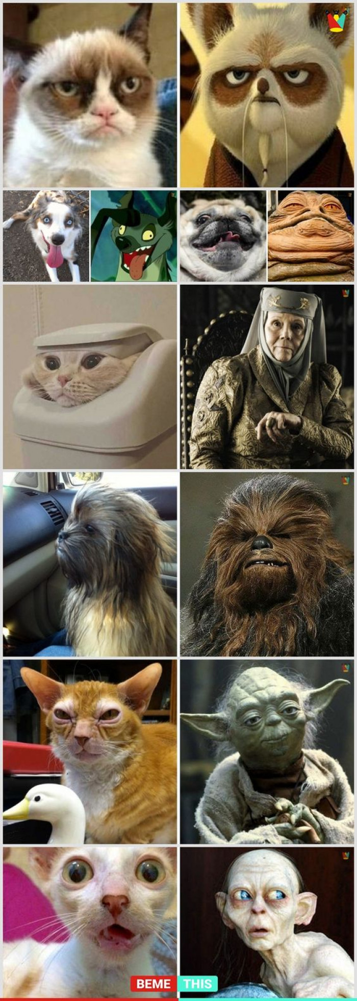 10 Funny Animals And Their Famous Actor Lookalikes