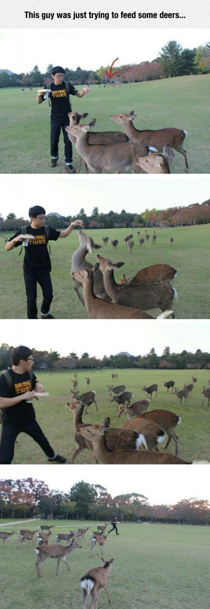 A Guy Tries To Feed Some Deers