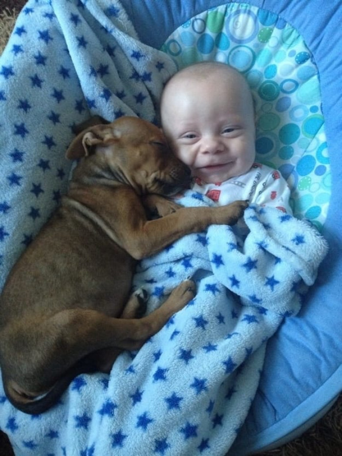 Baby And Puppy Alliance
