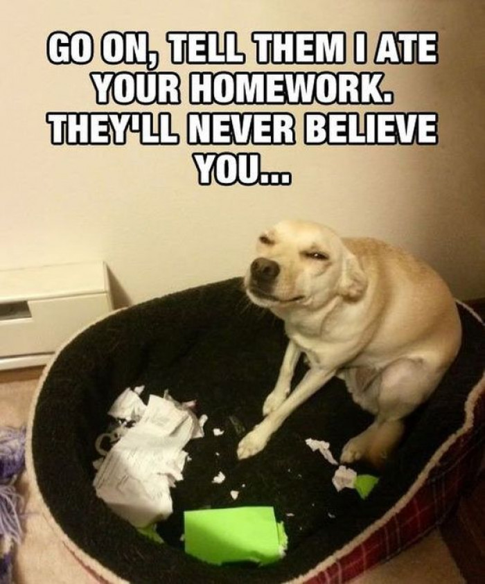 I Ate Your Homework