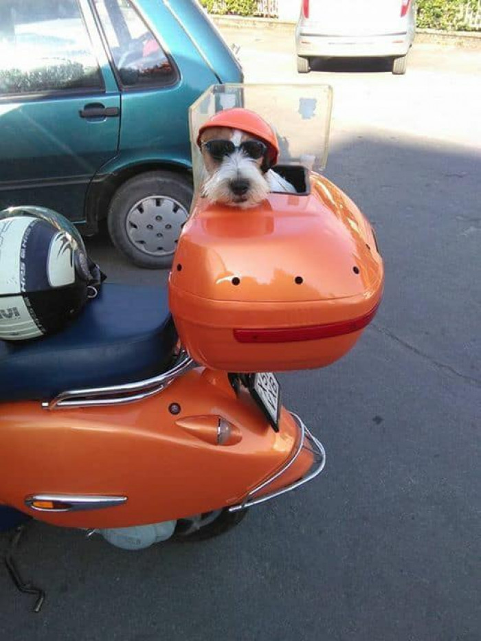 Lets Go For A Ride