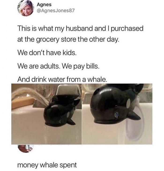 Money Whale Spent