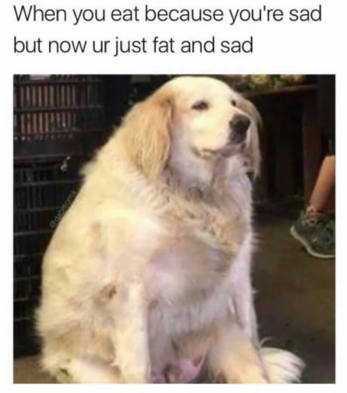 Now I Am Fat