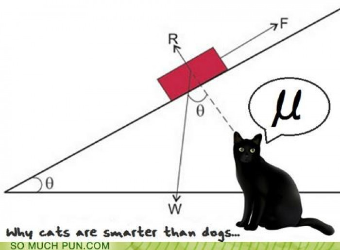 Why Cats Are Smarter Than Dogs