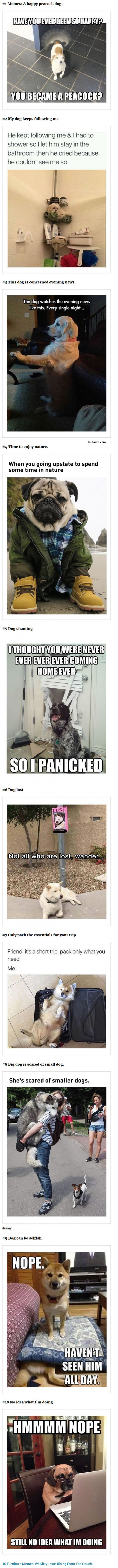 10 Must See Dog Memes