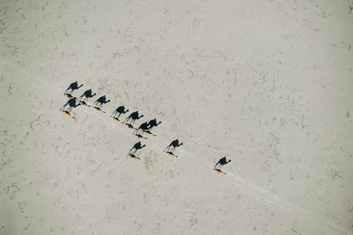 The Shadows Made From Camels