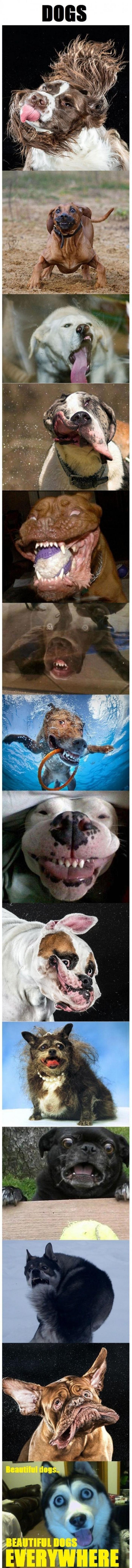 Majestic Dogs
