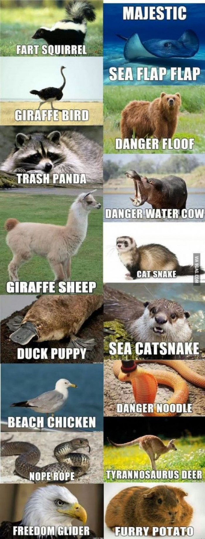 These Names For Animals Would Be Much Better