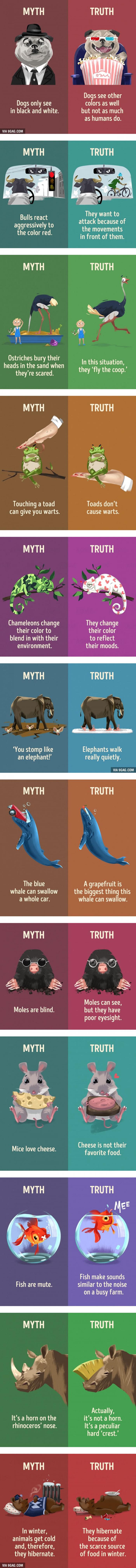 12 Animal Myths That We Still Believe