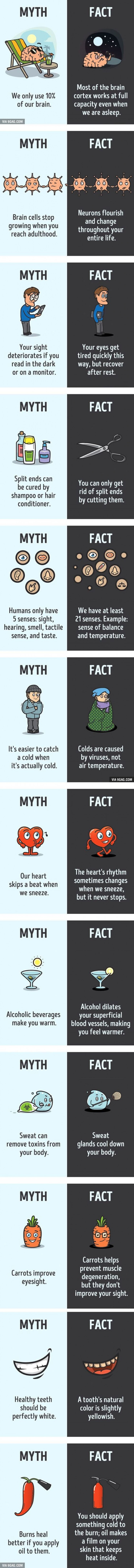 12 Myths That You Thought Were True