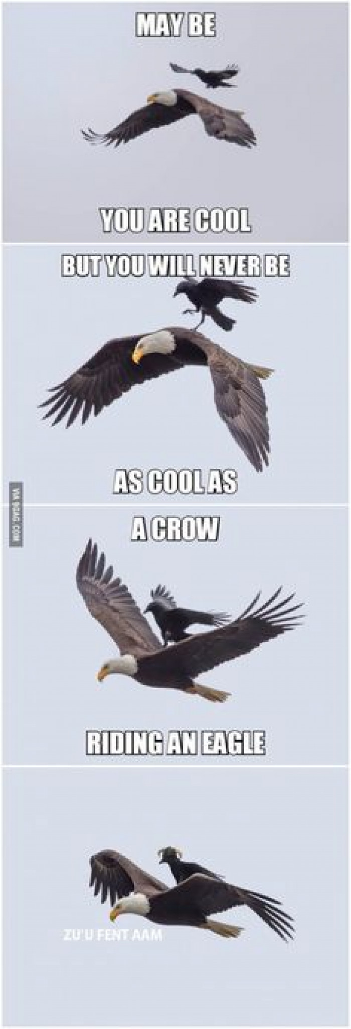 A Crow Ruidng An Eagle