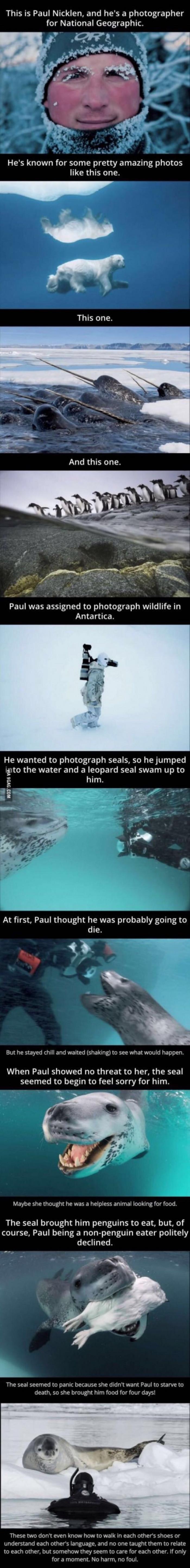 Animals Are Wonderful
