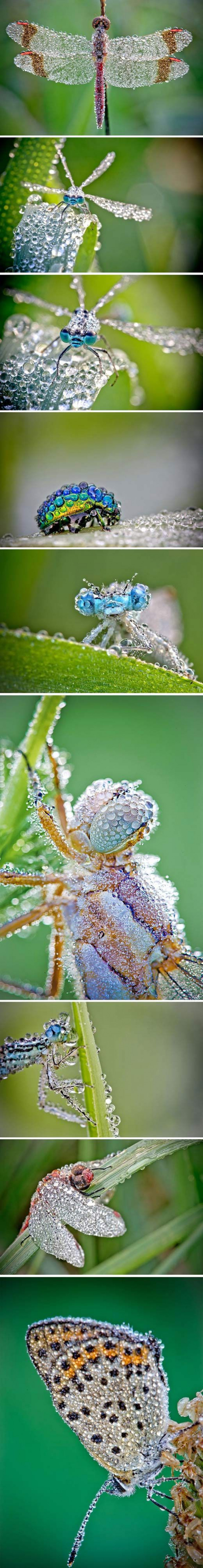 Droplets On These Insects Will Leave You Mesmerized