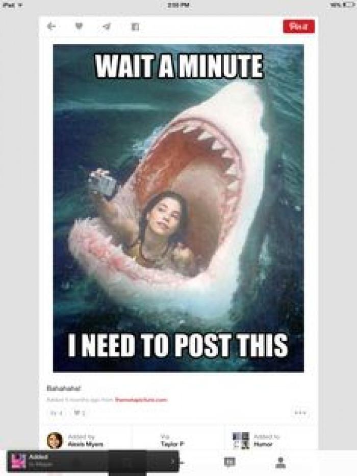 He's a nice shark