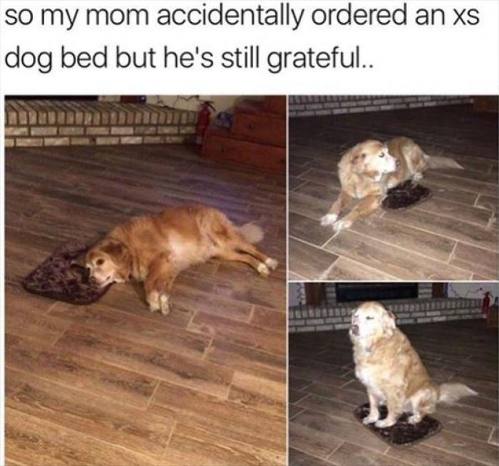 He's So Grateful