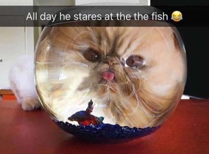 He Spends His Day Staring At The Fish...