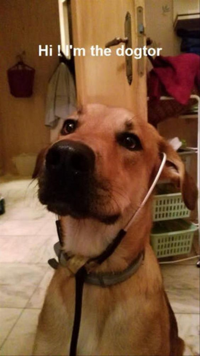 Hi, I'm The Dogtor!