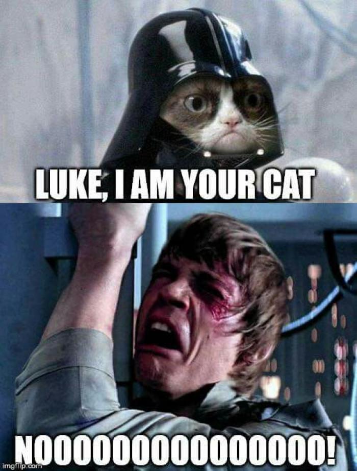 I am your cat!