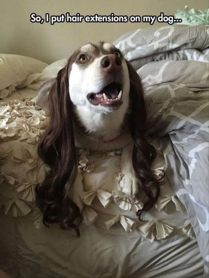 Just A Dog Rocking Hair Extensions...