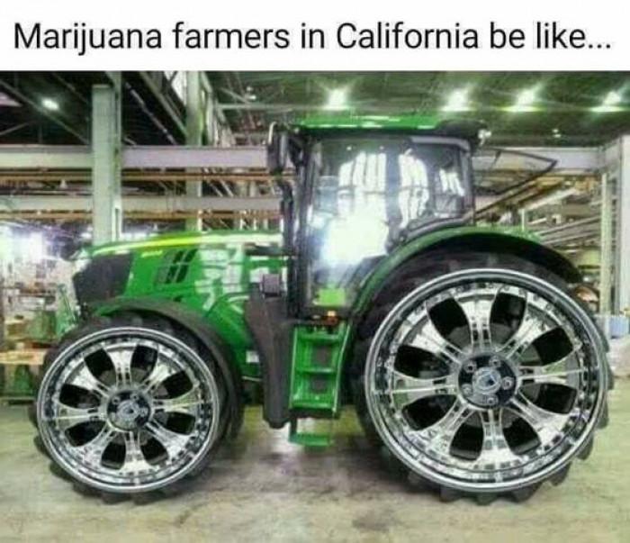 marijuana farmers