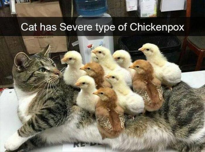 My Cat Has Chickenpox