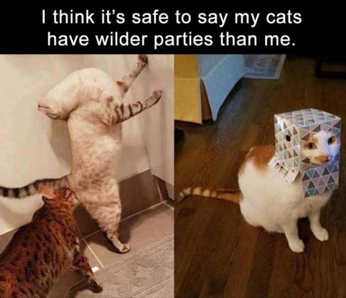 My Cat Has Some Wild Parties...