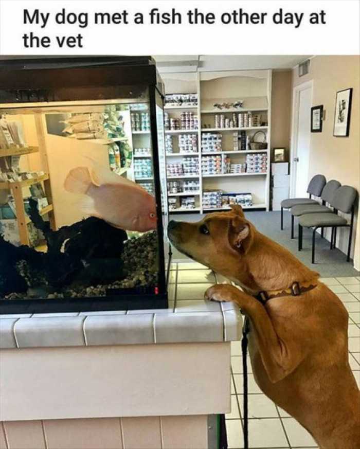 My Dog Met A Fish The Other Day