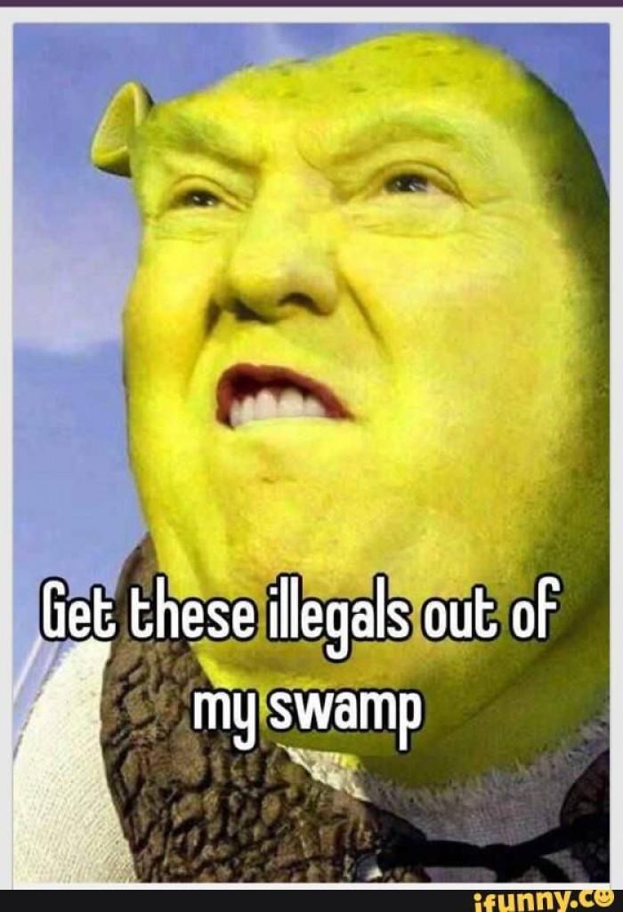 my swamp