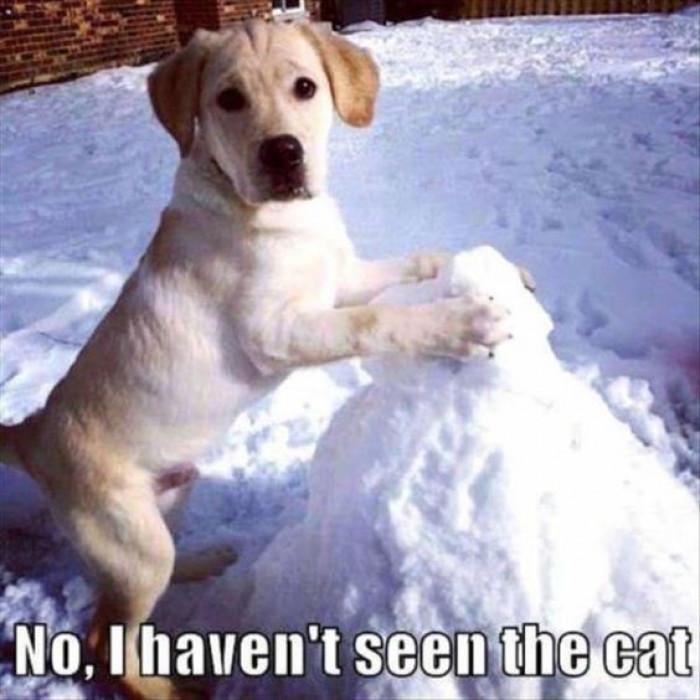 No I Haven't Seen The Cat