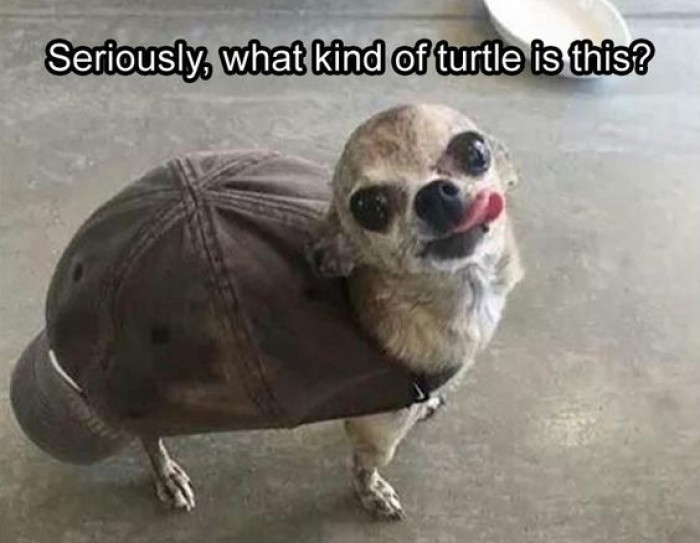 Seriously, What Kind Of Turtle Is This?