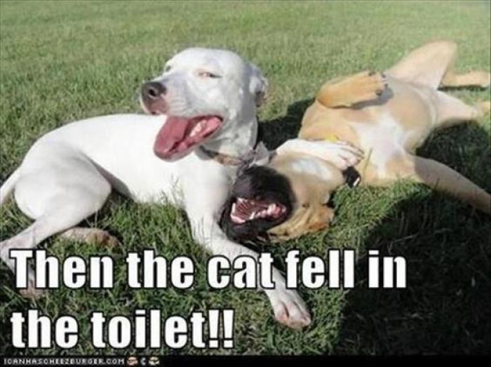 The The Cat Fell In The Toilet