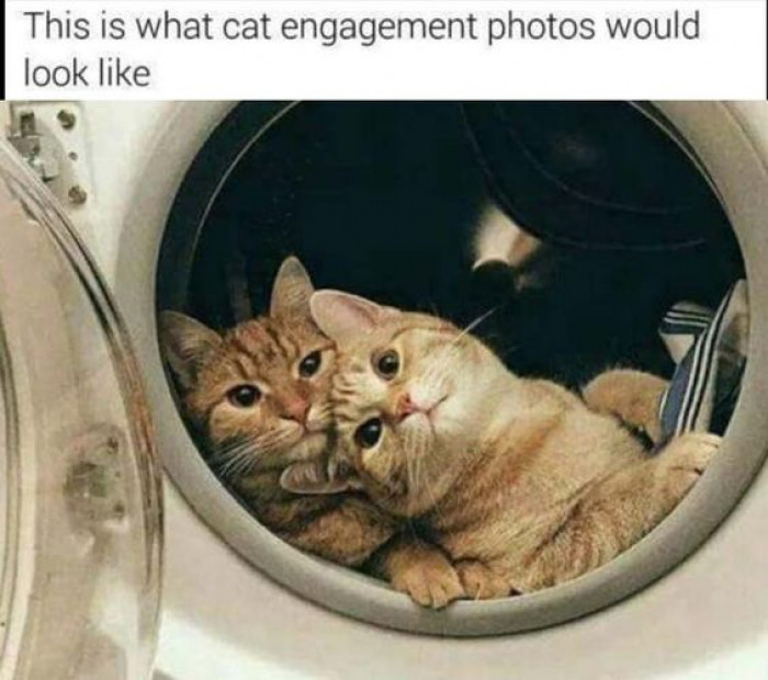 This Is What Cat Engagement Photos Would Look Like...