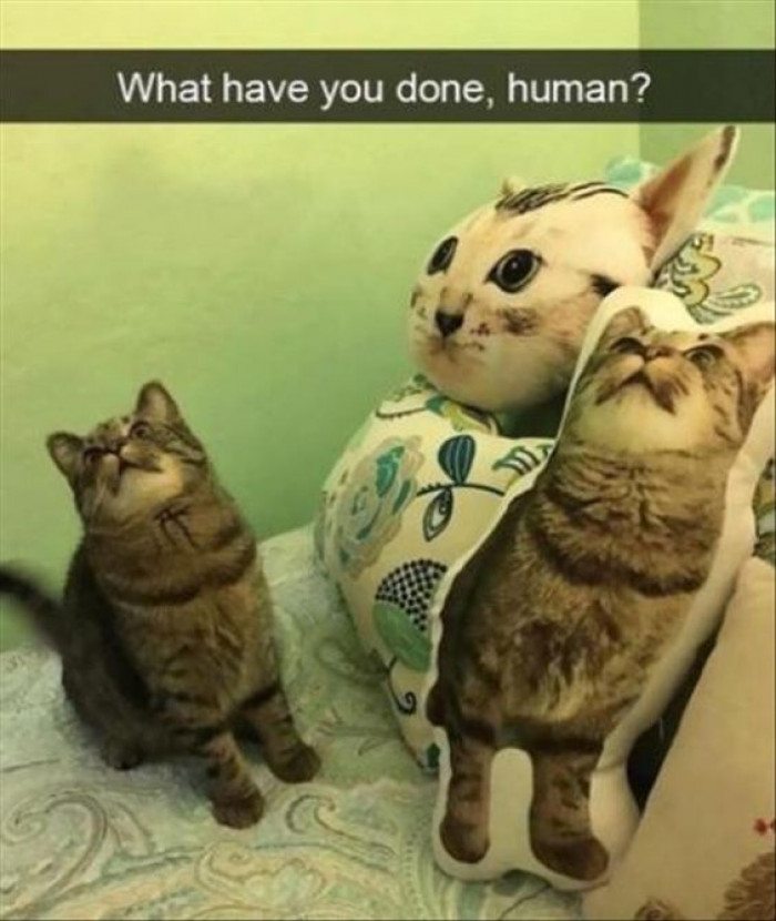 What Have You Done Human?