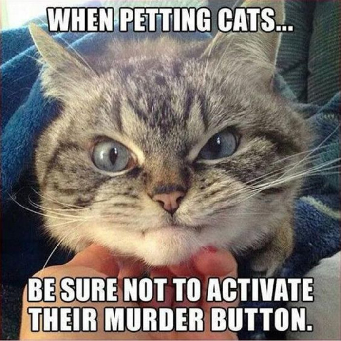 When Petting Cats...