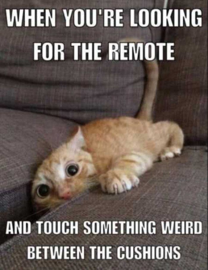 When You're Looking For The Remote