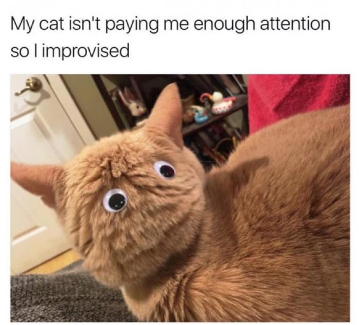 When You Want Attention From Your Cat