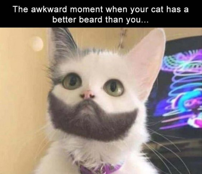 When Your Cat Has A Better Beard Than You