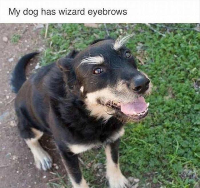 Wizard Eyebrows