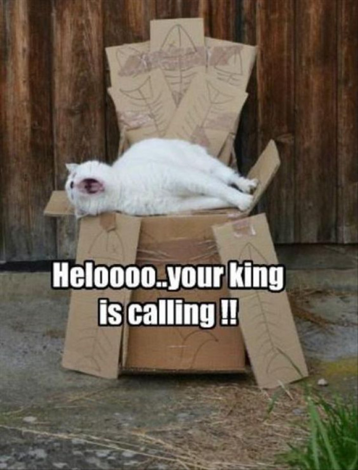 Your King Is Calling...