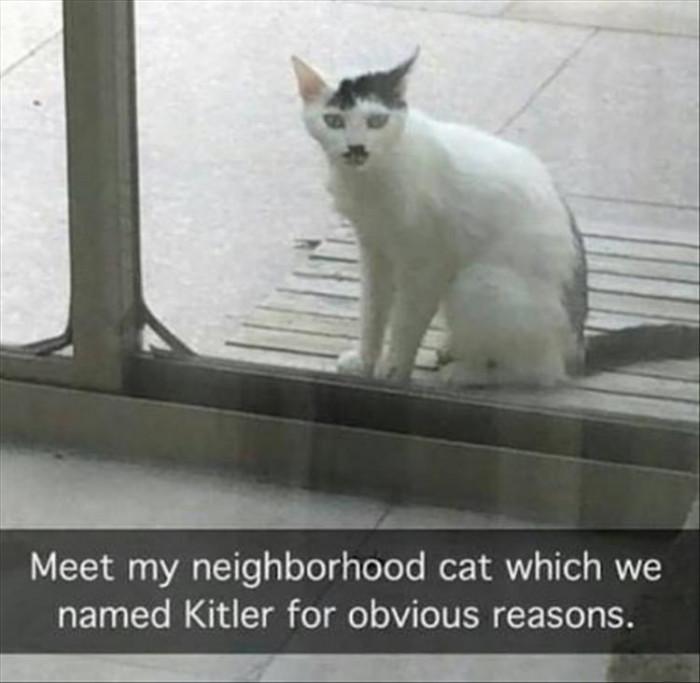Meet Kitler