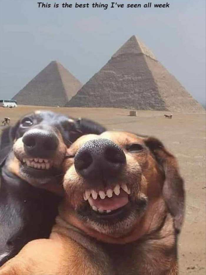 The Best Dog Selfie You'll See All Day
