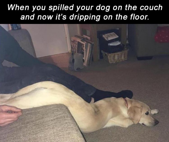 When You Spilled Your Dog