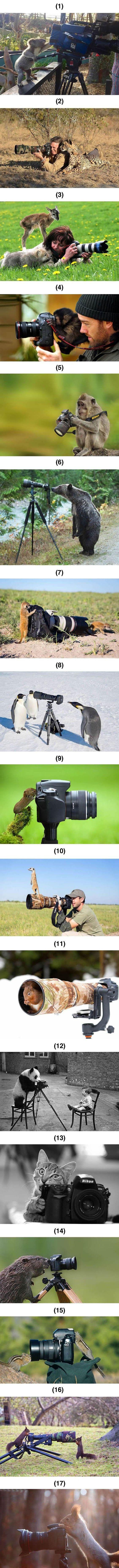 Animals taking up photography