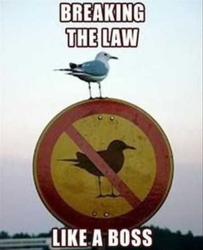 Because Laws Are There To Be Broken...