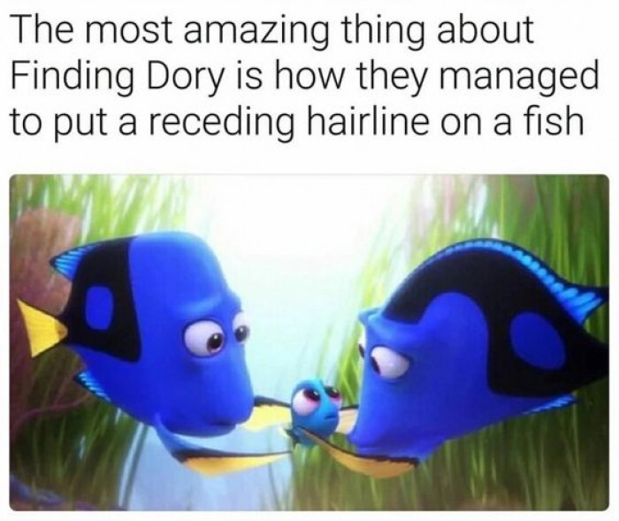 How Did They Put A Receding Hairline On A Fish?