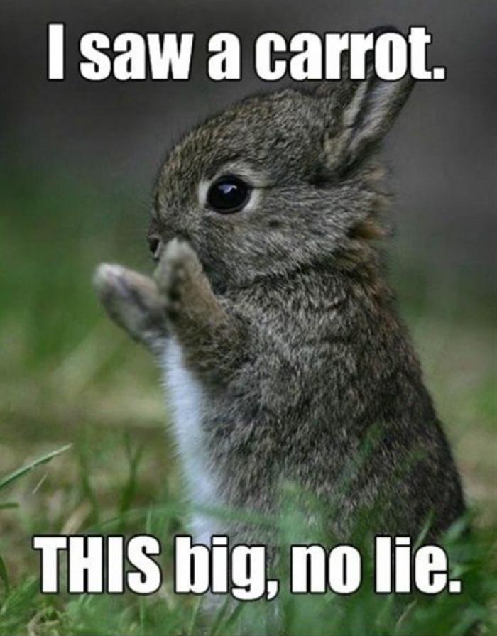 I Saw A Carrot