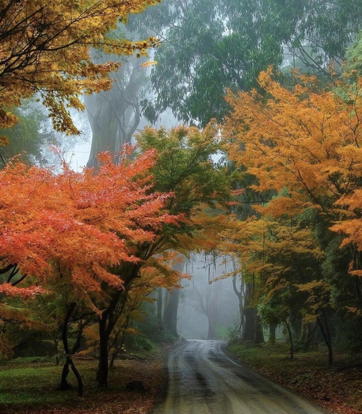The colours of autumn.