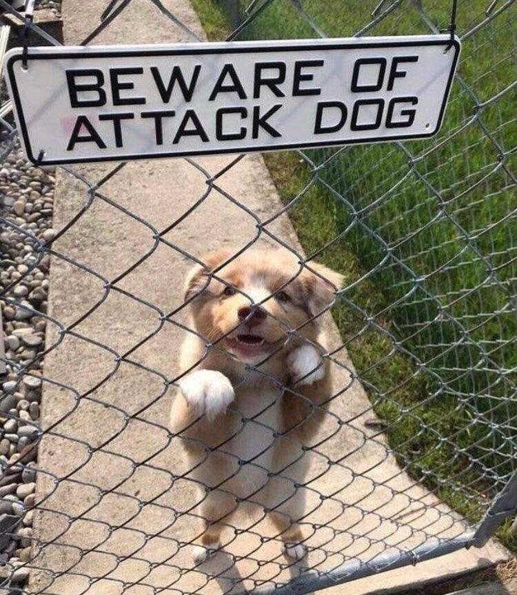 Beware of attack dog