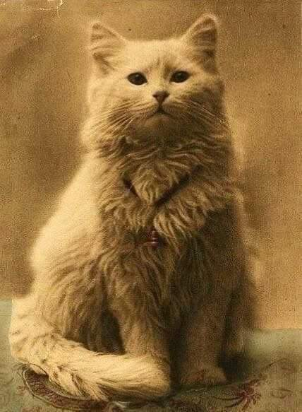 One of the world's first cat photos, c.1880s